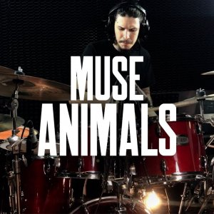 Muse - Animals Drum Cover